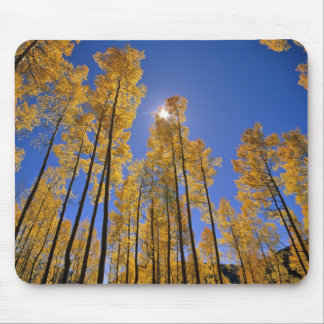 Aspen grove in autumn in the San Juan Range of Mouse Pad