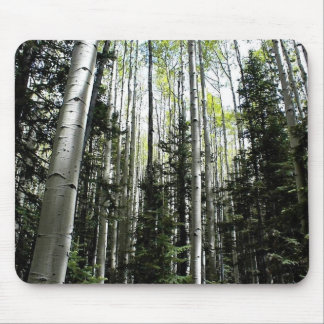 Aspen grove in forest mouse pad