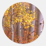 Aspen in Fall Classic Round Sticker