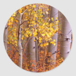 Aspen in Fall Round Sticker