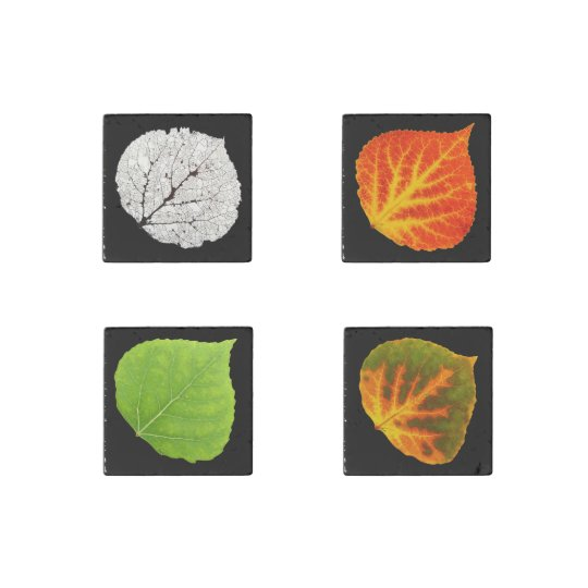 Aspen Leaves Medley Stone Magnets