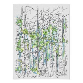 Aspen Tree Grove Pen and Ink Drawing Print