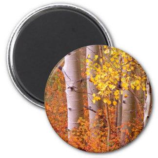 Aspen trees in Autumn Magnet