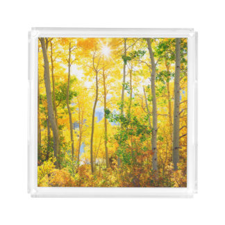 Aspen Trees In Fall | Sierra Nevada Mountains, CA Acrylic Tray