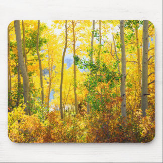 Aspen Trees In Fall   Sierra Nevada Mountains, CA Mouse Pad