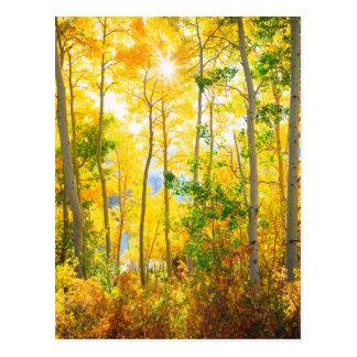 Aspen Trees In Fall | Sierra Nevada Mountains, CA Postcard