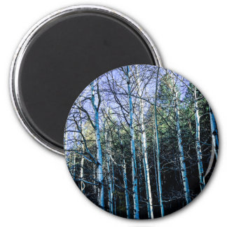 Aspen trees in the fall magnet
