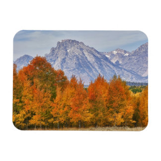 Aspen trees with the Teton mountain range 5 Magnet