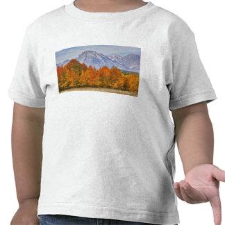 Aspen trees with the Teton mountain range 5 Shirts