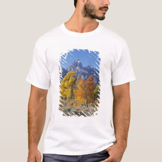 Aspen trees with the Teton mountain range 6 T-Shirt