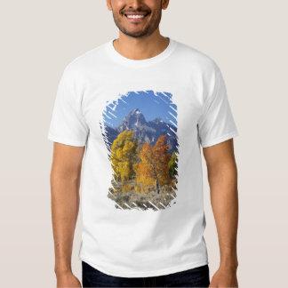 Aspen trees with the Teton mountain range 6 T-shirts
