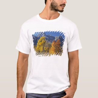 Aspen trees with the Teton mountain range T-Shirt