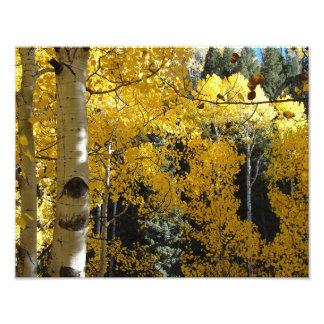 Aspen Wood Golden Hollow Photo Print