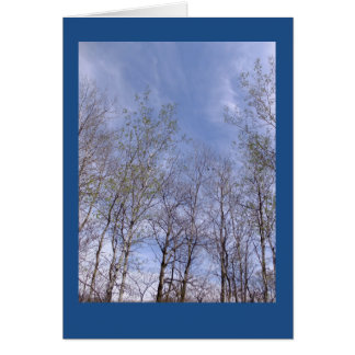 Aspens Against A Wisconsin Sky Blank Note Card
