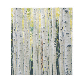 Aspens Forest - Painted Notepad