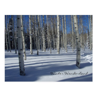 Aspens in Winter postcard