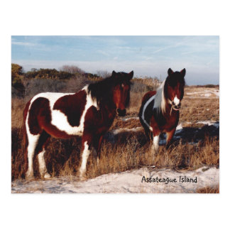 Assateague Wild Horses 2 - Postcard