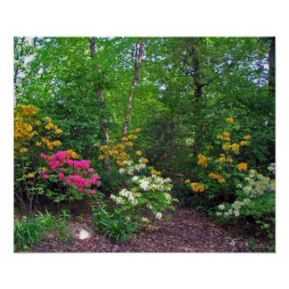 Assorted Northern Lights Azaleas Poster
