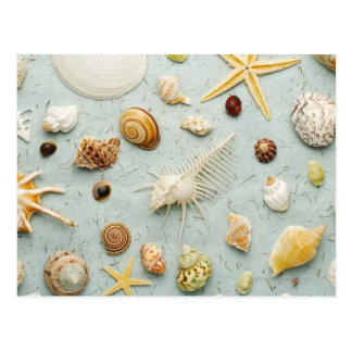 Assorted seashells on blue background postcard