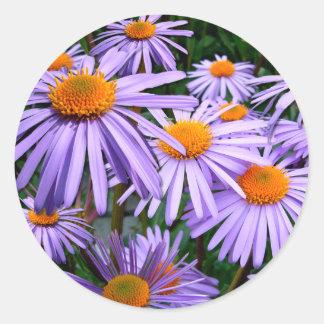 Aster-Tongolensis flower Round Sticker