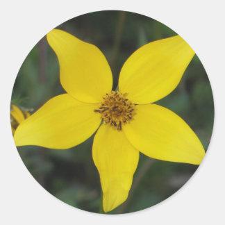 Asteracea Round Sticker
