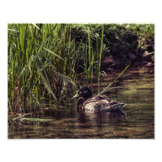 At Pond's Edge Photo Print