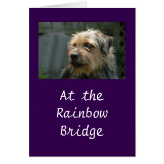 At the Rainbow Bridge Card