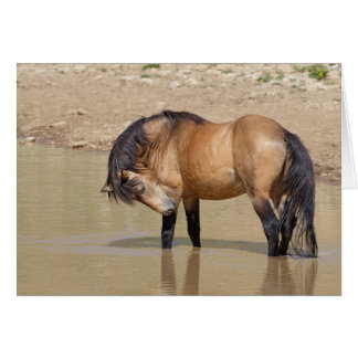 At the Waterhole Wild Horse Greeting Card