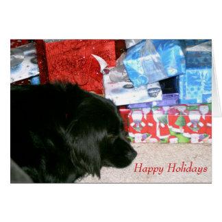 Athena waiting for Christmas Card