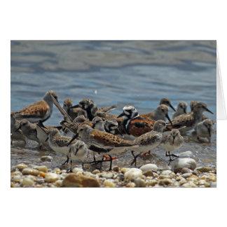 Atlantic Coast Shorebirds: Delaware Bay Card