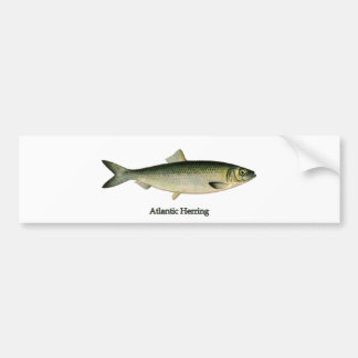 Atlantic Herring Bumper Sticker