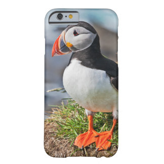 Atlantic Puffin Barely There iPhone 6 Case