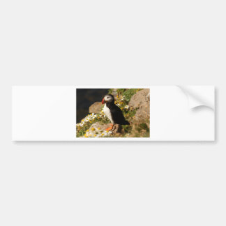 Atlantic Puffin Bumper Sticker