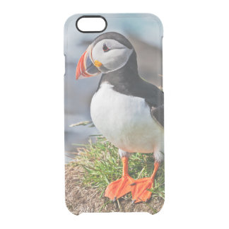 Atlantic Puffin Clear iPhone 6/6S Case