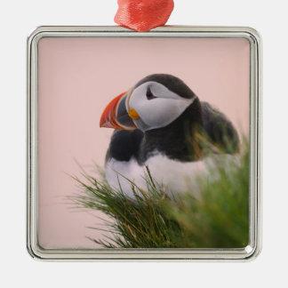 Atlantic Puffin (Fratercula arctica) 6 Metal Ornament