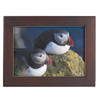 Atlantic Puffin (Fratercula arctica) 7 Keepsake Box