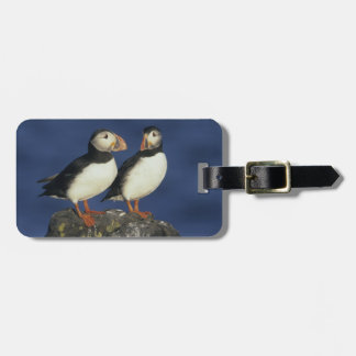 Atlantic Puffin, Fratercula arctica), in Luggage Tag