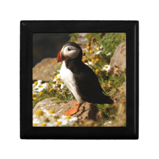 Atlantic Puffin Gift Box