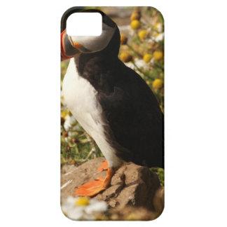 Atlantic Puffin iPhone 5 Case