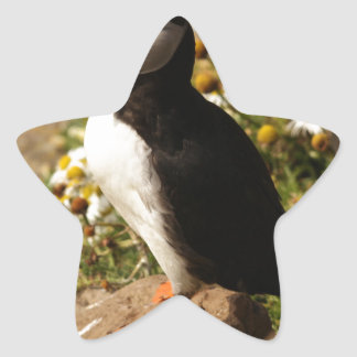 Atlantic Puffin Star Sticker