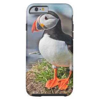 Atlantic Puffin Tough iPhone 6 Case