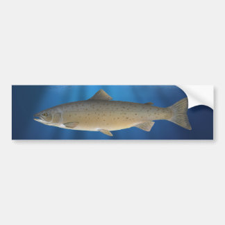 Atlantic Salmon – Bumper Sticker