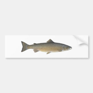 Atlantic Salmon Bumper Sticker