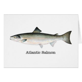 Atlantic Salmon Card