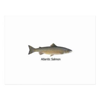 Atlantic Salmon (titled) Postcard