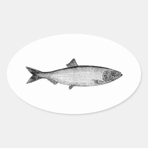 Atlantic Sea Herring Stickers