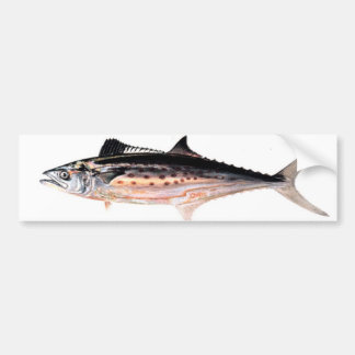 Atlantic Spanish Mackerel Bumper Sticker