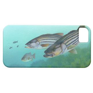 Atlantic Striped Bass Fish Morone Saxatilis Case For The iPhone 5