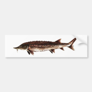 Atlantic Sturgeon - Acipenser oxyrinchus Bumper Sticker