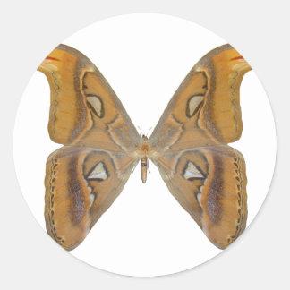 Atlas Butterfly Round Sticker